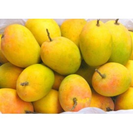 Alphonso Mangoes - Delicious Hapus Mango - Medium Size (1 Dozen)