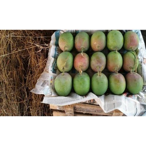 Raw Alphonso Mangoes - Delicious Hapus Mango - Medium Size (4 Dozen)