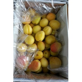 Apricot Fruit Box : 24 pcs