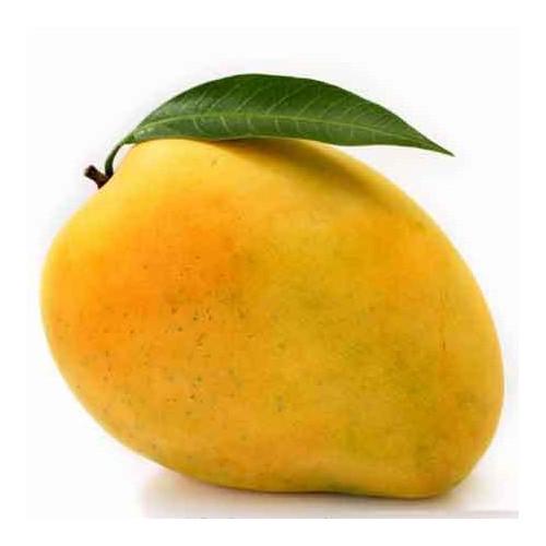 Alphonso Mango - Delicious  Hapus Mango - King Size (2 dozen)