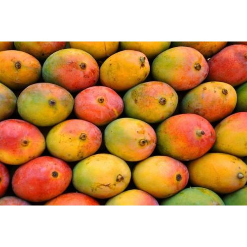 Payri Mango - Amrut Payri - Pack Size : 6 Dozen