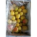 Apricot Fruit Box : 24 pcs